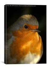 Portrait Of A Robin, Canvas Print