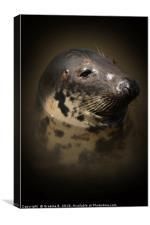 Portrait of a Seal, Canvas Print