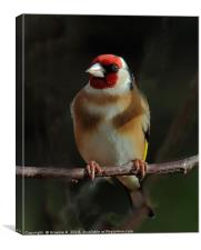 Goldfinch In The Shadows, Canvas Print