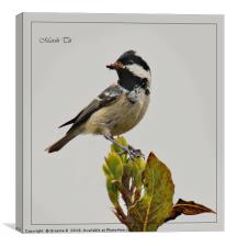 Marsh Tit, Canvas Print
