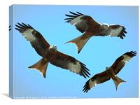 Red Kite Trio, Canvas Print