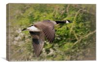 Goose in Flight, Canvas Print