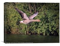 Flying Goose 2, Canvas Print