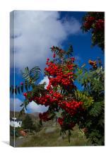 Cherry red rowan berries, Canvas Print