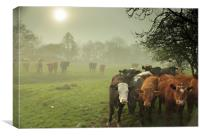 Cattle in The Mist, Canvas Print