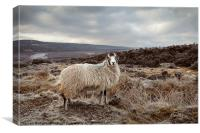 It's Cold on Them Moors., Canvas Print