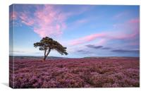 Egton Moor Heather, Canvas Print