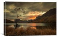Lone Tree - Buttermere, Canvas Print