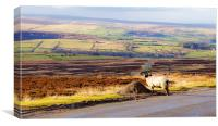 On the Moors, Canvas Print