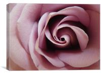 Anniversary Rose, Canvas Print