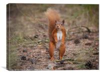 Woodland Squirrel, Canvas Print
