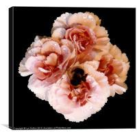 Bumble Roses, Canvas Print