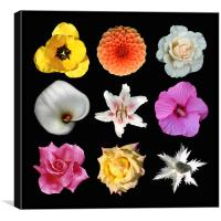 9 Flowers, Canvas Print