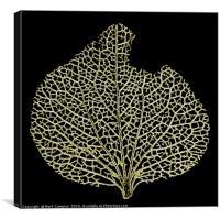 Skeleton Leaf, Canvas Print