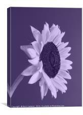 Purple Sunflower, Canvas Print