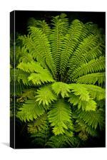 Giant green fern, Canvas Print