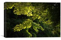 Sunlit Leaves, Canvas Print