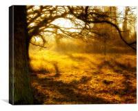 Golden Sunset, Canvas Print