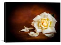 White Rose, Canvas Print