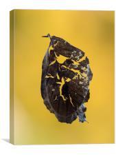 Autumn Leaf, Canvas Print