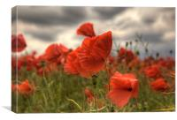 Poppies in the wind, Canvas Print