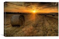 Harvest Cornfield Sunset, Canvas Print