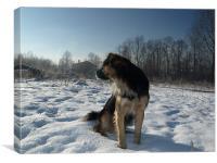 Dog on snow, Canvas Print