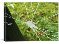 Natures Jewel: An ice covered cobweb, Canvas Print