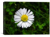 Daisy Head with Pollen, Canvas Print