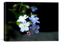 Forget me not Flower, Canvas Print