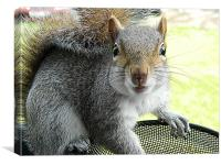 Squirrel in bird feeder, Canvas Print