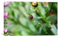 Ladybird on stalk, Canvas Print