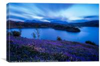 Bluebells after sunset, Canvas Print