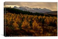 Larch in the Autumn, Canvas Print