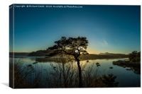 Lone Scots Pine, Canvas Print
