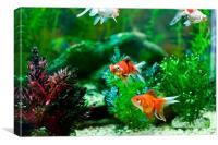 Fish Tank, Canvas Print