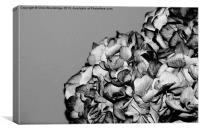 Dried Flowers, Canvas Print