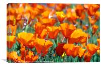 Field of Orange, Canvas Print