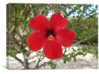 Hibiscus in Bloom, Canvas Print