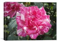 Arabesque Rose, Canvas Print