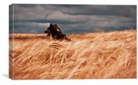 Grizzley in the corn, Canvas Print