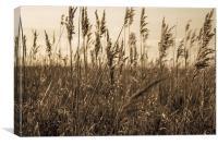 Golden Field, Canvas Print