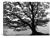 Lonely Tree at Rivington Pike, Canvas Print
