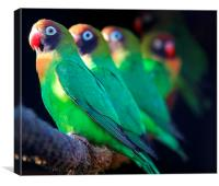 A Few Fisher Love Birds, Canvas Print