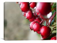 red berries, Canvas Print