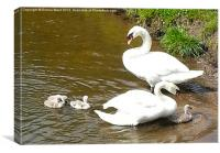 The Swan Family, Canvas Print