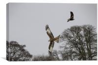 Spread Eagle, Canvas Print