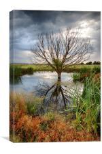 Waterlogged Tree, Canvas Print