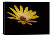 Yellow on Black, Canvas Print
