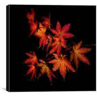 Autumn Fire, Canvas Print